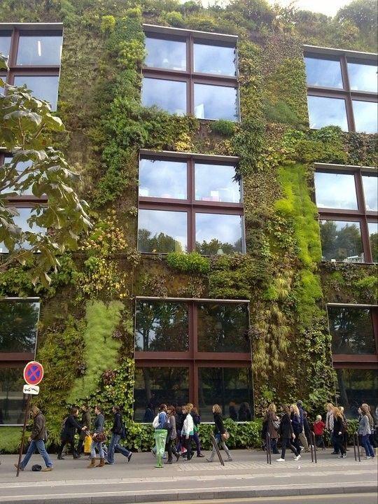 Le mur végétalisé : un mur vert très vert